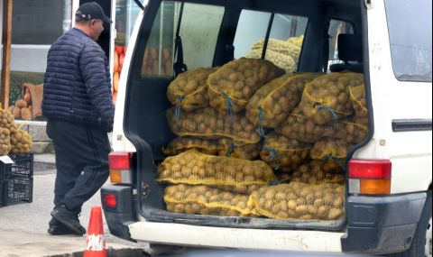 Картофопроизводители получиха близо 1,7 млн. лева за борба с телените червеи