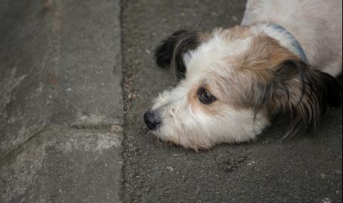 Мъж уби жестоко кучето си с дървен кол