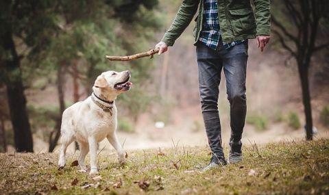 Куче се е заразило с британския вариант на COVID-19 в Испания