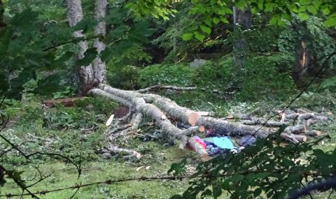 Жена загина, затисната от дърво в Разградско - 1