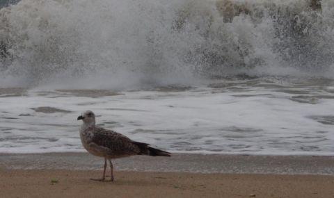 Еколози: Кое налага урбанизацията при плажа