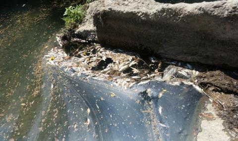 Проверки след сигнал за мъртва риба в река Осъм