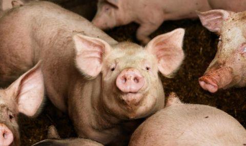 Масово не регистрират лични стопанства за животни в Ямболско