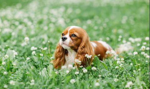 Любимите кучета на аристократите - 1