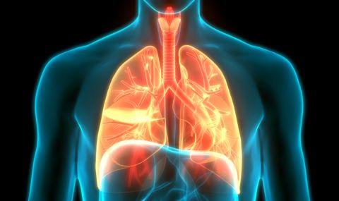 Как да изчистим белите дробове от цигарения дим и мръсния въздух