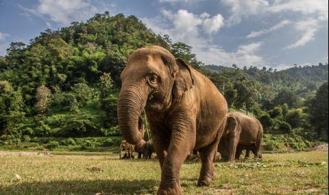 Стадо слонове, което обикаля из Китай повече от година, е сензация в социалните мрежи (ВИДЕО)