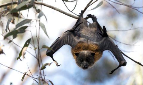 Откриха останките на последния гигантски прилеп-вампир (СНИМКИ) - 1