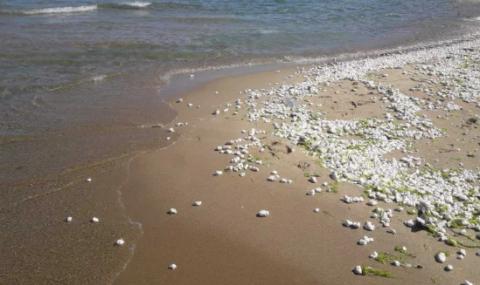 Отпадъци от палмово масло и на плажа в Бургас