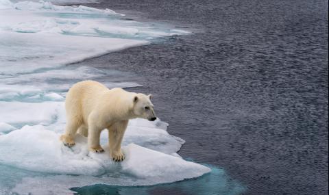 Арктика ще се разтопи до 40 години