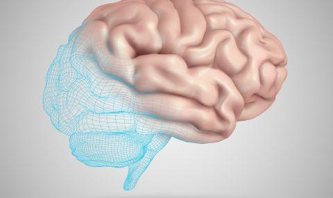 Създадоха първата в света 3D карта на мозъка на маймуна - 1