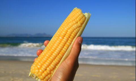 Опасна ли е варената царевица от плажа?