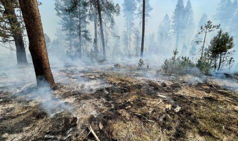 Горски пожари в САЩ: Огънят е обхванал 13 щата
