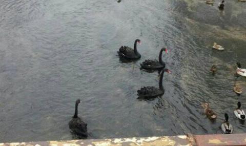 Страшно знамение се появи в река край Луковит (СНИМКА) - 2
