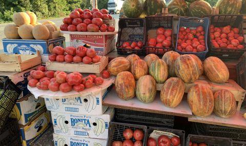В Нигерия ще се отглеждат отново български домати - 1