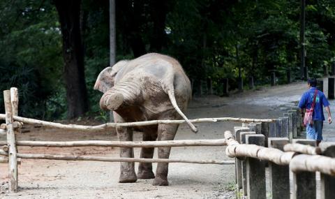 Мистериозна смърт покоси стотици слонове в Ботсвана