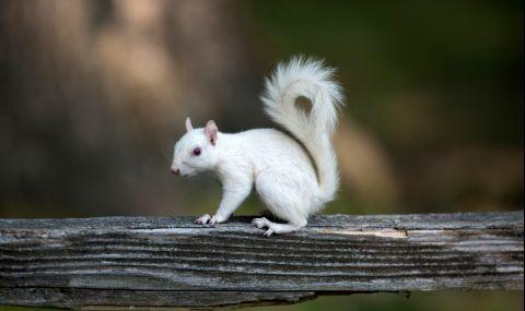 Заснеха много рядка катерица албинос (СНИМКИ)