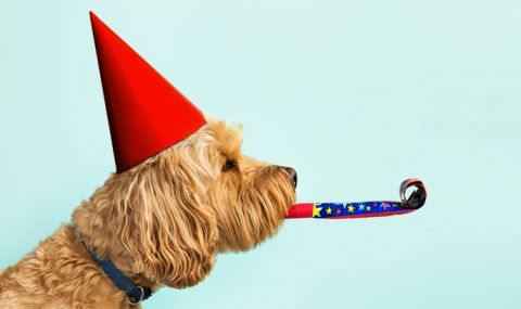 Световен ден на кучето: Любопитни факти за най-добрия приятел на човека - 1