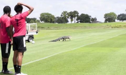 Крокодил нахлу на тренировката на канадски клуб (ВИДЕО)