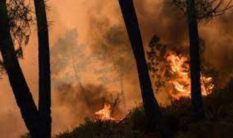 Голям пожар край хасковското село Брягово - 1