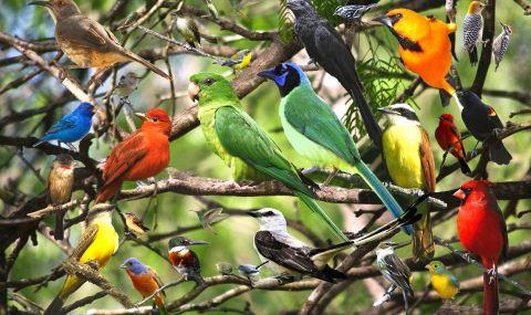 В САЩ измират много птици и никой не знае защо