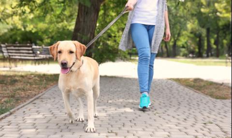 Осиновяват кучета, само за да се разхождат с тях