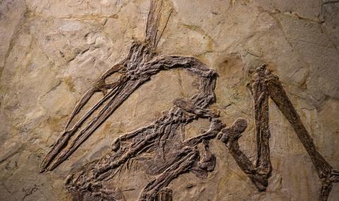 Откриха следи от летящи влечуги в Сахара