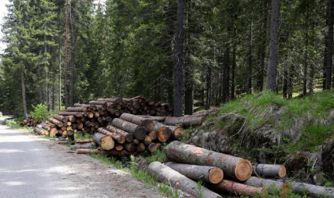 В Ловешко установиха 125 кубика незаконно изсечена дървесина
