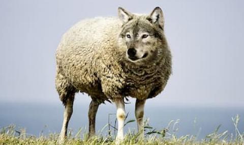 Овчите кожи на просперитета