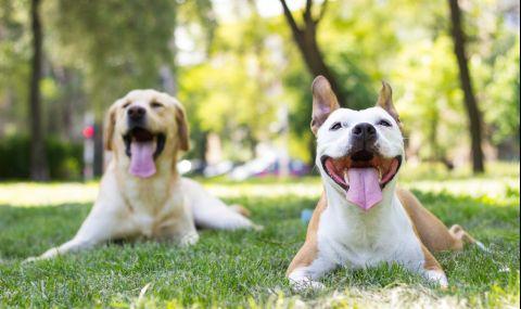 Как да подхождаме към непознати кучета
