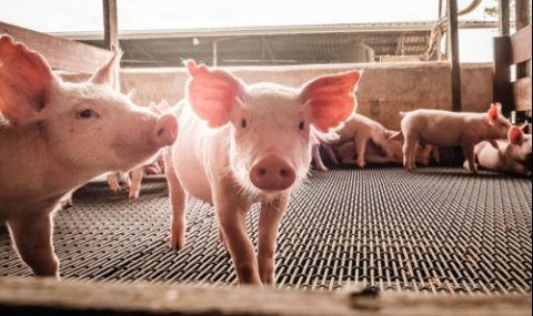 Арести за фермери, прибрали субсидии, без животни в обектите