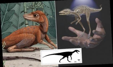 Откриха прародител на динозаврите