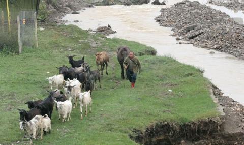 Откраднали над 100 кози от фермер в Твърдица