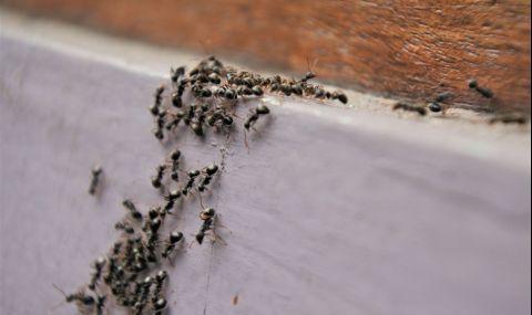 Този трик прогонва мравките от дома ви - 2