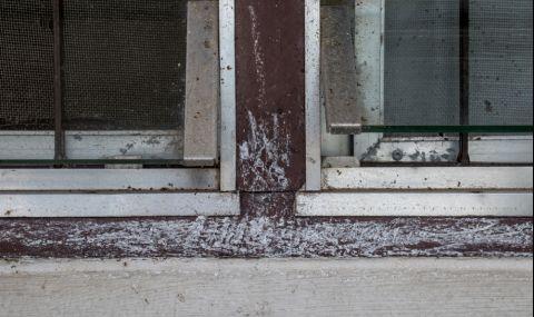 Този трик прогонва мравките от дома ви - 3