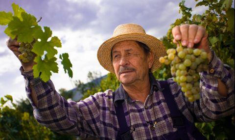 Френските винопроизводители са изправени пред една от най-лошите си реколти в историята - 1