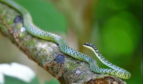 Ето как летят змиите (видео)