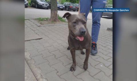 Заснеха как стопанин изхвърля кучето си на столична улица