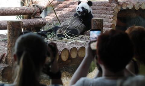 Пандите в зоопарка в Москва слушат Путин