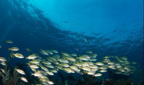 Шумът от хората убива рибата