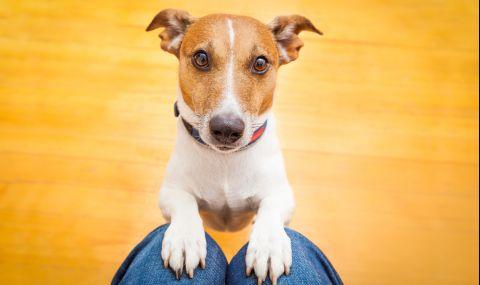 Кучета осъдиха стопанина си, той им дължи обезщетение - 1