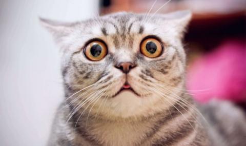 Мъж натопи домашни котки в нафта