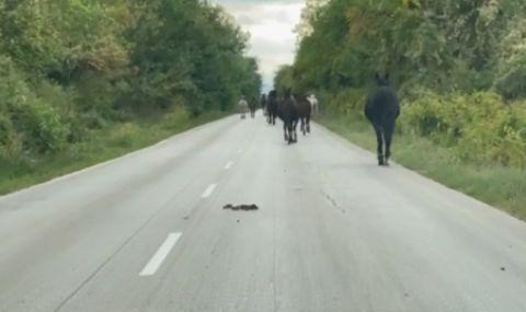 Изтърваха 30 коня на път в Ловешко - 1