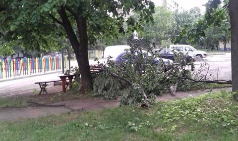 Ураган нанесе множество щети във Враца