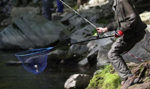 Две пъстърви от Камчия струваха 1500 лева на рибар