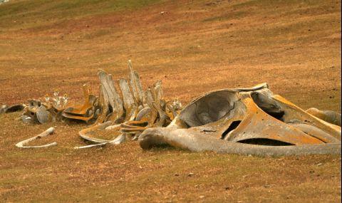 Откриха вкаменелости на нов вид земноводен кит (ВИДЕО) - 1