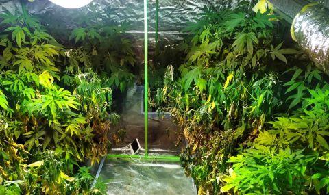 Разкриха наркооранжерия в хотел в Слънчев бряг (СНИМКИ)