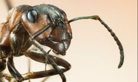 Този трик прогонва мравките от дома ви - 1