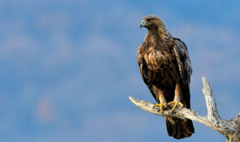 До 30 % от хищните птици са застрашени от изчезване - 1