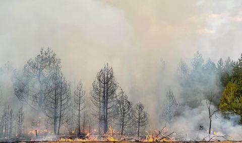 Пожар бушува в Плана планина край София - 1