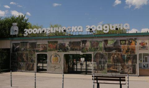 Зоопаркът в София остава отворен